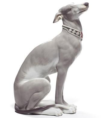 attentive greyhound